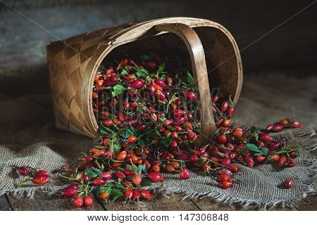 Ripe rose hips scattered from a basket in rustic style