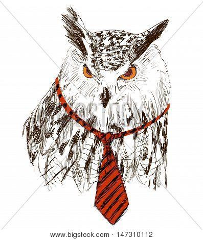 Vector sketch of owl in tie. Retro illustration