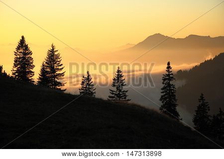 trees in evening light with mountain background