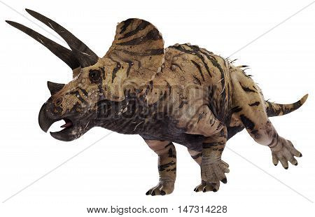 3D rendering of Triceratops horridus on the move, isolated on white background.