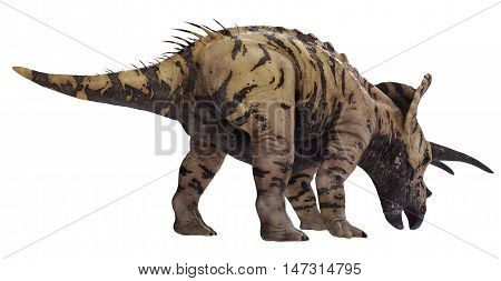 3D rendering of Triceratops horridus feeding, isolated on white background.