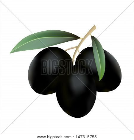 Black olives with leaves isolated on white background realistic vector illustration