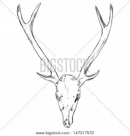 Vector Sketch Deer Skull