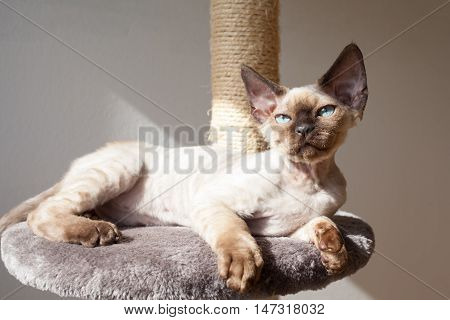 Beautiful kitten is laying down on the scratching post and enjoying the warmth of sunlight. Cat is laying near the window, feeling relaxed and comfortable. Pet Equipment, Accessories and supplies