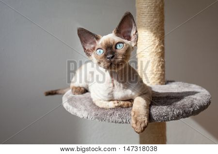 Beautiful kitten is sitting on the scratching post and enjoying the warmth of sunlight. Cat is sitting near the window. Pet Equipment, Accessories and supplies