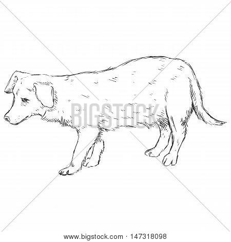 Vector Sketch Dog