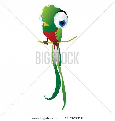 vector funny cartoon cute colorful animal image. Birds. Quetzal