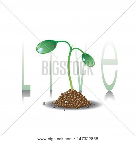 Green plant with growth slogan LIVE .Save green idea.Young sprout logo. Agriculture, ecology, new life and spring concept. Spring seedling illustration.