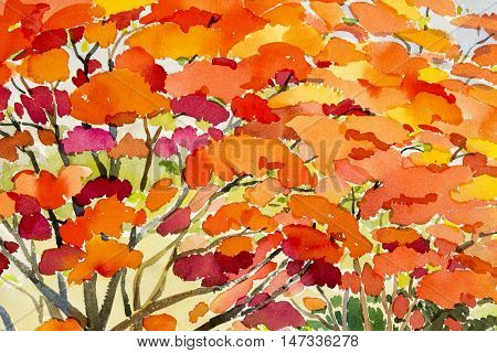 Abstract watercolor landscape original painting red orange color of peacock flower and sky background