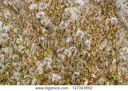full frame detail shot showing some sere vegetation