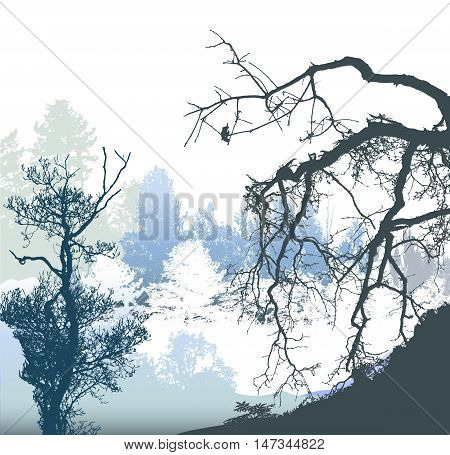 Winter panoramic landscape with bare and snowy trees and plants. White, blue,gray and black silhouettes of trees