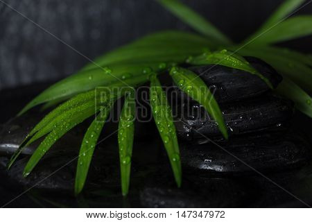 Wet Black Basalt Stones With Green Leaf, On Black Background