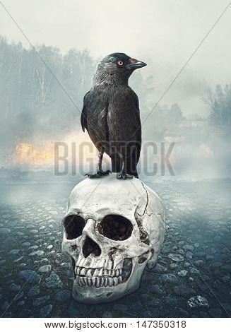 Black Raven On The Skull. Halloween Scene