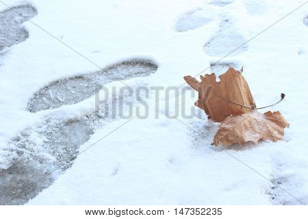 leaf and footsteps in the cold and snow