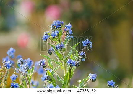 Small blue flower details with granular cluster buds