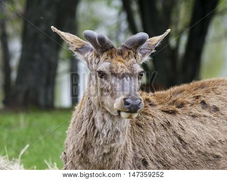 brown shaggy deer are standing on the green gras in the forest near the trees and river