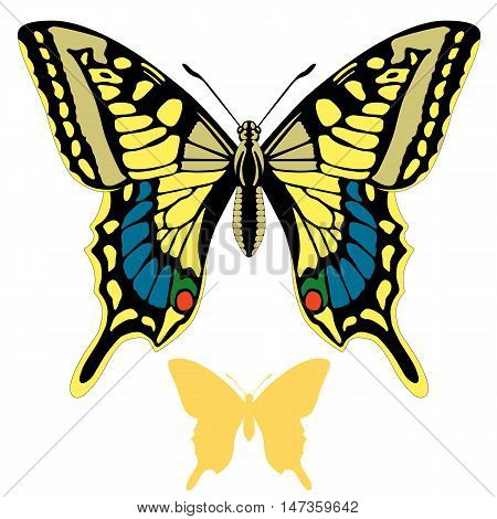 butterfly vector illustration set silhouette orange side