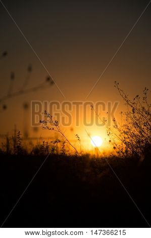 Blurry sunset with grass - Field of grass during sunset