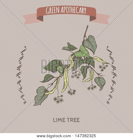 Tilia cordata aka small leaved lime or linden color sketch. Green apothecary series. Great for traditional medicine, gardening or cooking design.