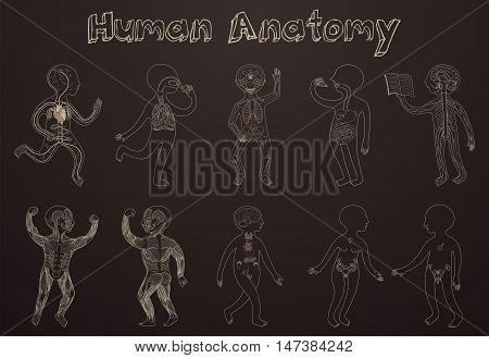 Educational illustration of human anatomy systems of organs for kids. Vector cartoon poster with contour silhouettes on dark background.