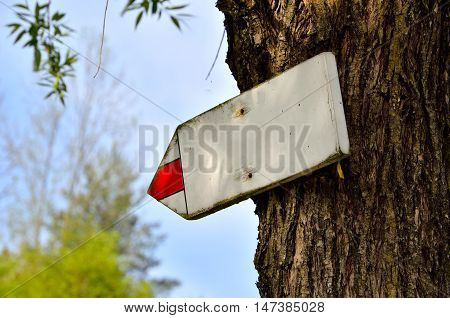 Wooden tourist sign on a tree pointing the way with space for your text.