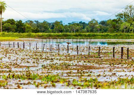 Wetlands in Pantanal, Brazil