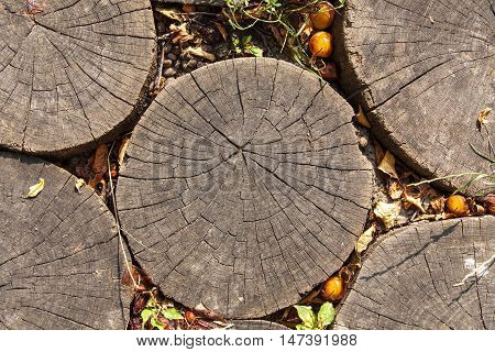 Top view of old tree stump texture for background