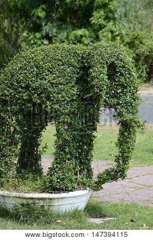 close up fresh green elephant dwarf trees in nature garden
