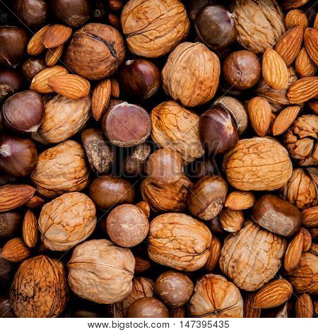 Different Kinds Of Nuts In Shells ,cashew, Almond, Walnut,hazelnuts, Pecan And Macadamia..