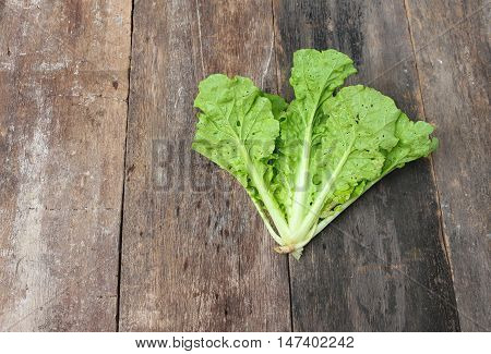 Chinese cabbage organic vegetables on a wooden table. Insect eat hole in the leaf. Top view with copy space