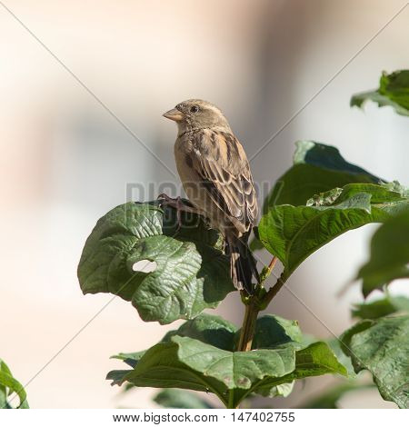sparrow sitting on a branch with green leaves