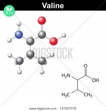 Valine proteinogenic amino acid - chemical formula and model 2d and 3d illustration vector on white background eps 8