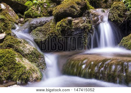 Mountain river flowing through the green forest. Stream in the wood. Waterfall in the forest