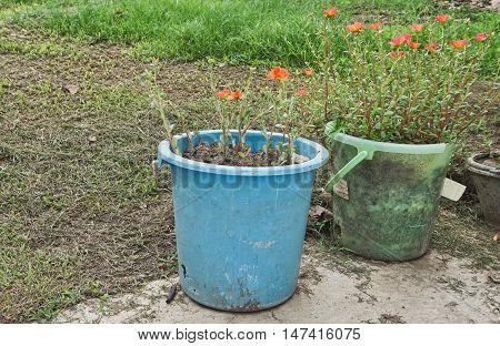 Wear out water buckets are used for flowerpots. Reuse old bins in flower garden.
