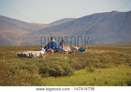 Nenets yurtas in the polar tundra and the Ural Mountains on the background.