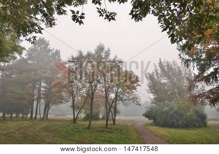 Foggy morning in the autumn city park. Track between the trees and bushes leads gaze into the distance into the fog.