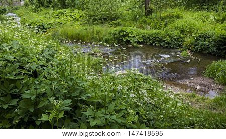 a small fast river with many grass and plants at the banks