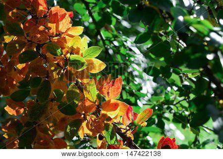 autumn leaves in the park, autumn landscape
