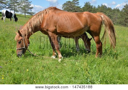 Meadow With Horse And Foal