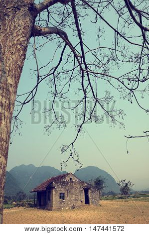Amazing scene of at Quang Binh countrysideVietnam. Abandoned stone house under big neem tree in summer a place for discover tour