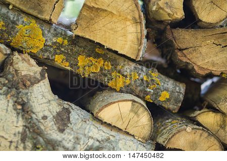 Log cabin texture. Barn natural debarked textured wall background with place for copy space close up