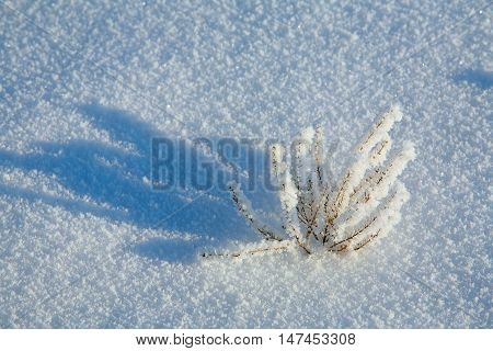 Frost On A Dry Grass