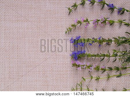 Green stalks with blue and pink flowers are on the right on sackcloth. Postcard in a rustic style with wildflowers.