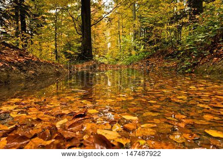 Pond with fallen leaves in a forest after autumn rain at mountain Goc, Serbia