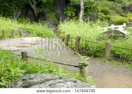 Outdoor Footpath, Green Plants In Garden