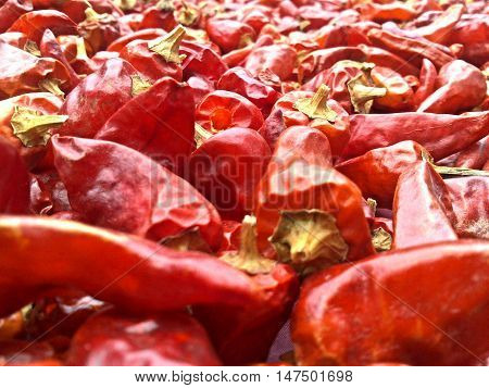A close up picture of red chillies