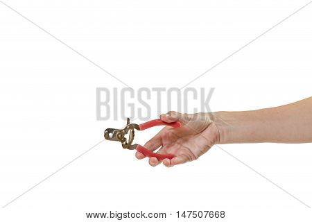 Woman hand is holding dog nail clippers for grooming pets isolated on the white background