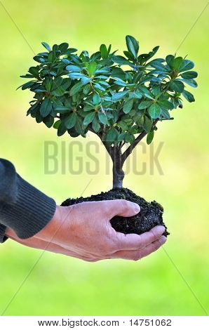 Tree and soil in man's hands over out of focus green background