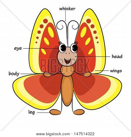 Cute cartoon butterfly. Vocabulary of body parts. Vector illustration