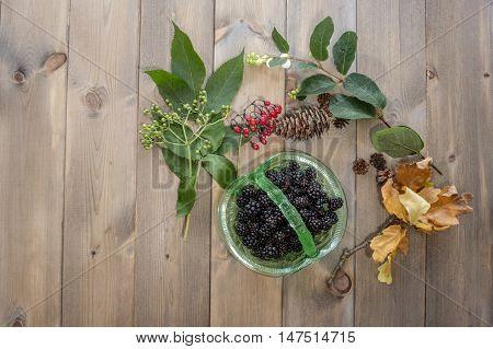 Top down image of hedgerow gatherings. Vintage green glass dish of blackberries surrounded by elderberries bright red bittersweet berries white snowberries pinecones and oak leaves on wooden table.